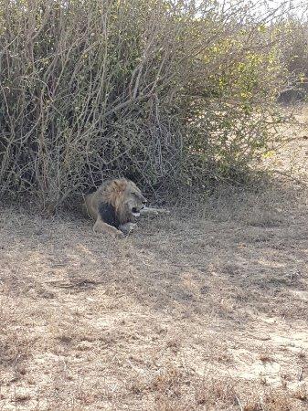 Tsavo National Park East, Kenia: 20160802_161901_large.jpg