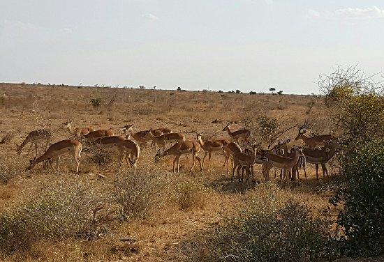 Tsavo National Park East, Kenia: 20160802_192701_large.jpg