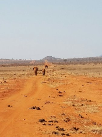 Tsavo National Park East, Kenia: 20160803_094229_large.jpg
