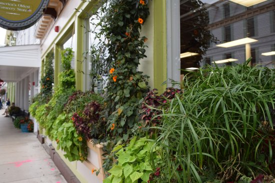 Doud's Market: Their window boxes are always so neat