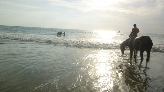 Mal País, Costa Rica: swimming with horses