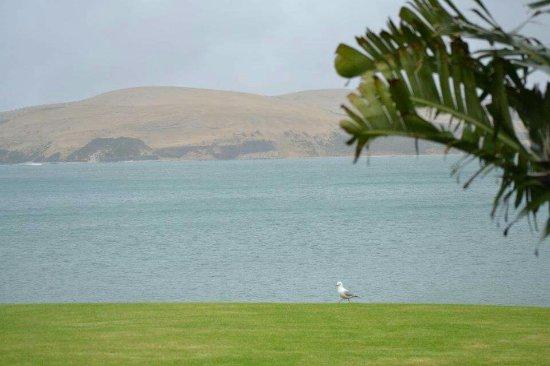 Omapere, Nueva Zelanda: FB_IMG_1474159923550_large.jpg
