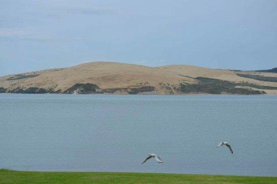 Omapere, Nueva Zelanda: FB_IMG_1474159858329_large.jpg