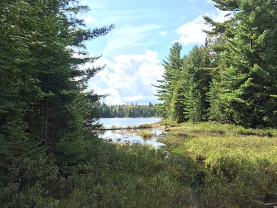 Great walk and look for loons Peck Lake Trail Algonquin