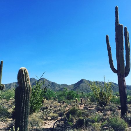 McDowell Sonoran Preserve: photo0.jpg