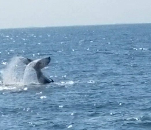 Cape May Whale Watch & Research Center : 20160917_155025_large.jpg