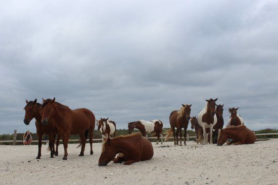 Assateague Island National Seashore: Even on a cloudy day, amazing is just around the corner....