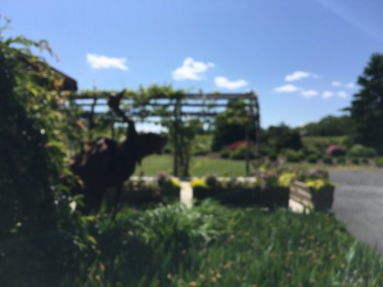 Romulus, NY: the garden