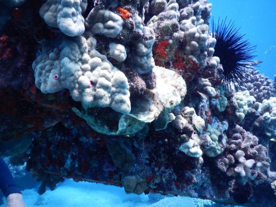 Ka'anapali, Hawái: Frog Fish