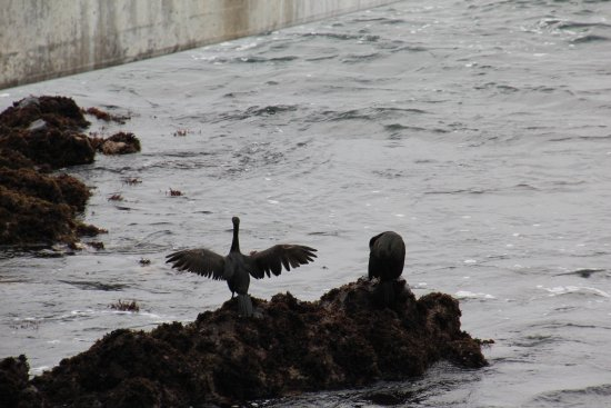 Moss Landing, Califórnia: Silly bird.