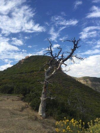 Mancos, CO: photo2.jpg