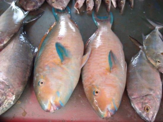 Rawai, Tayland: Рыба попугай