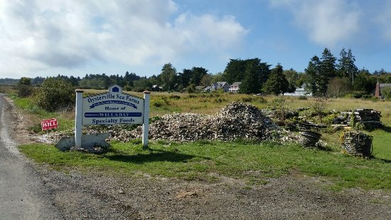 Oysterville, WA: Willapa-oysters