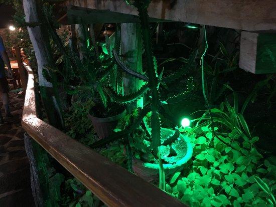 Il Giardino: photo2.jpg