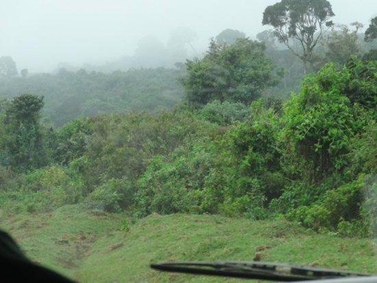 Nyeri, Kenya: Aberdares Mist