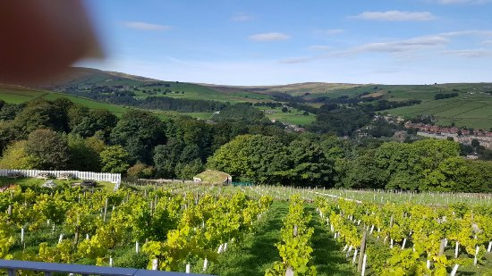 Holmfirth Vineyard: 20160917_102329_large.jpg