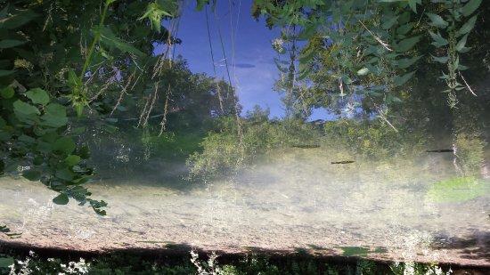 Blaubeuren, Alemania: Fischreiches klares Wasser