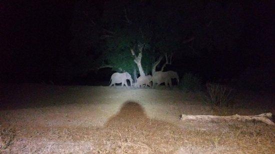 Balule Private Game Reserve, جنوب أفريقيا: Olifanten in de tuin tijdens het diner