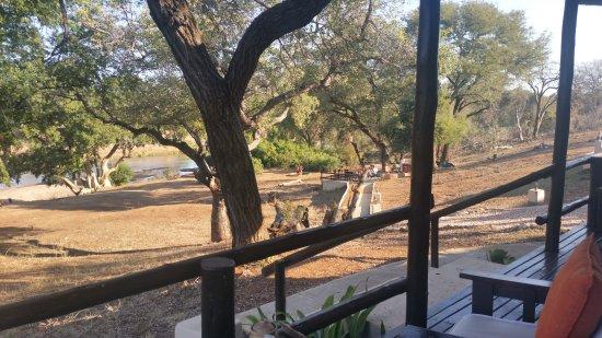Balule Private Game Reserve, Νότια Αφρική: Wat een heerlijk uitzicht vanaf je veranda