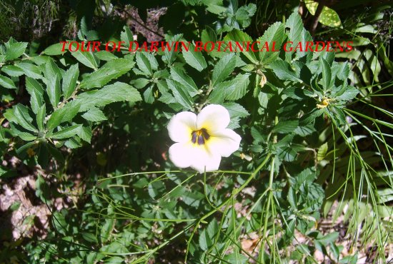 Darwin Botanic Gardens : Garden flower