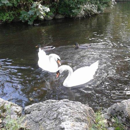 Lytham St Anne's, UK: Ashton Gardens