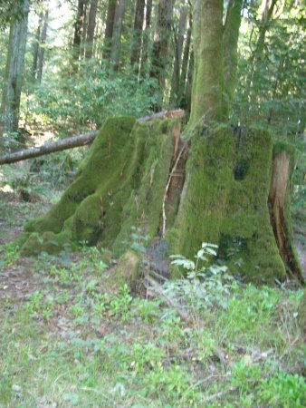 Cotillion Gardens RV Park: Moss Covered Tree Stump