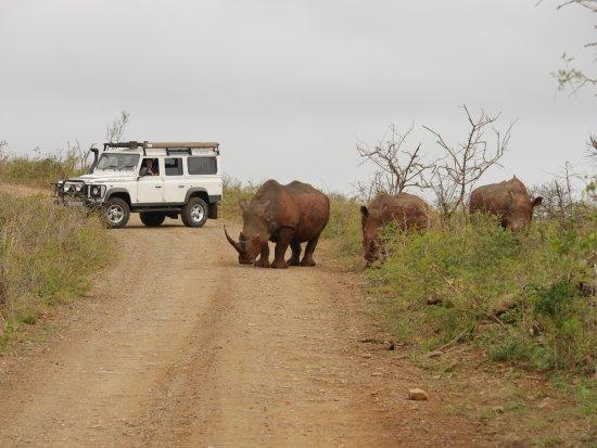 Durban Day Safaris: saari