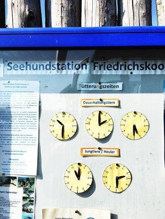 Friedrichskoog
