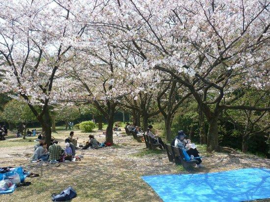 Kuraki Park