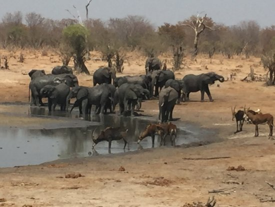 Ghoha Hills Savuti: Elephants and Sable at nearby watering hole