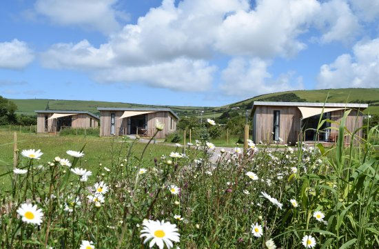Braunton, UK: Flowers in the Meadows in summer