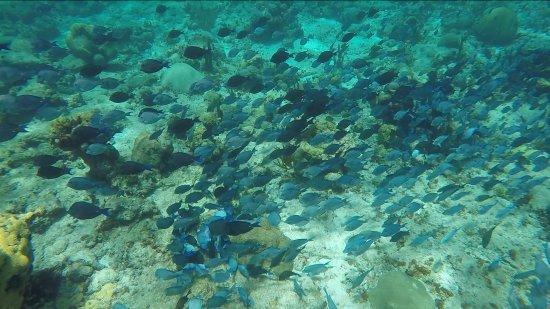 Christiansted, St. Croix: Buck Island under water
