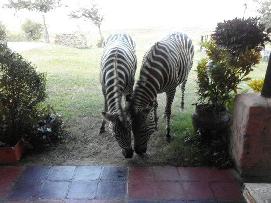 Kariba, Zimbabue: Marty and Friends