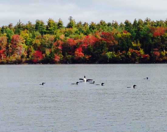 Holderness, NH: Fall Loons Rafting