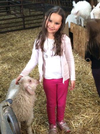 Le Haut-Corlay, Francja: Emma a pu approcher les chevreaux ... un régal !