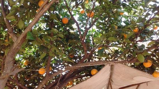 A la Pipetua!: Comimos bajo un naranjo, un placer.