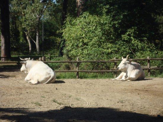 Parco Naturale di Cervia : Animali nel parco
