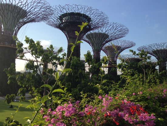 Gardens By The Bay: One Of The Many Tropical Gardens Surrounding The Giant  Light Trees