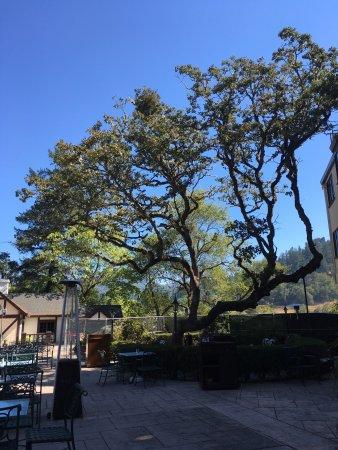 Benbow Historic Inn: photo0.jpg