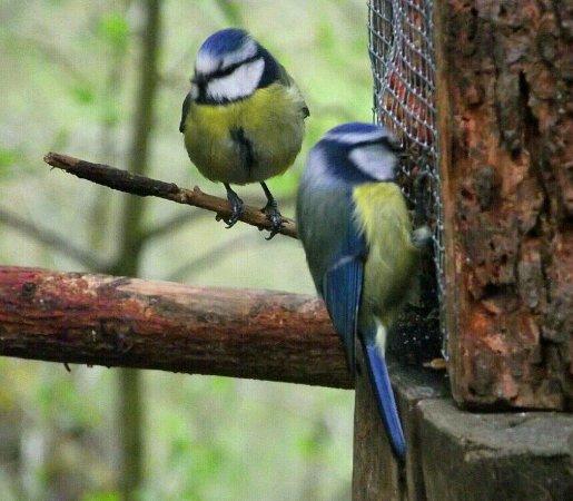 Aviemore, UK: Eat cake and watch the wildlife
