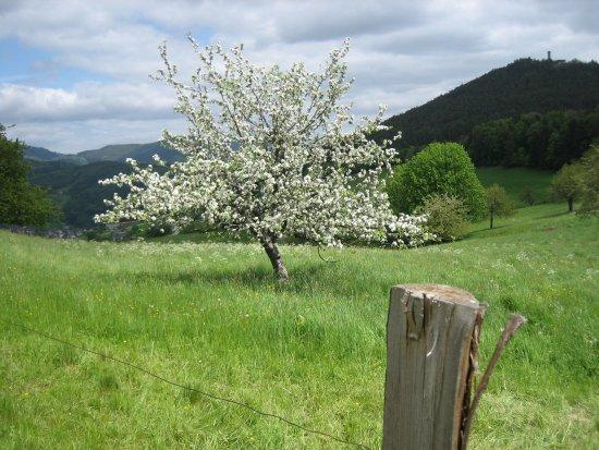 Lapoutroie, Francia: Le printemps là haut sur la montagne ....