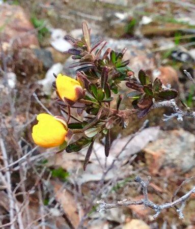 澳洲Kalamunda: Wild Flowers in Spring @ Piesse Brook
