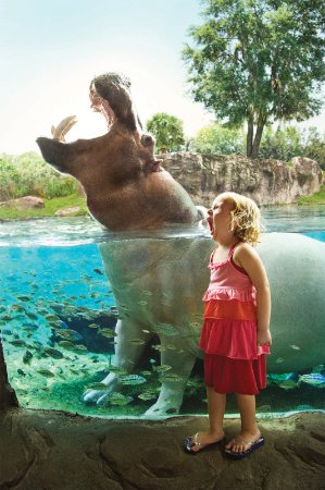 busch gardens vacation packages. Busch Gardens Vacation Packages