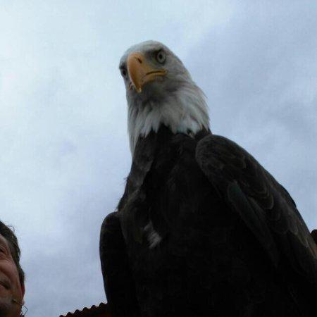 Águila calva - Photo de Tierra Rapaz, Calahorra - TripAdvisor