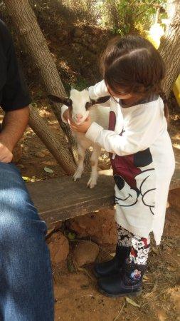 Cessenon-sur-Orb, Frankrijk: Les animaux en liberté tout le long