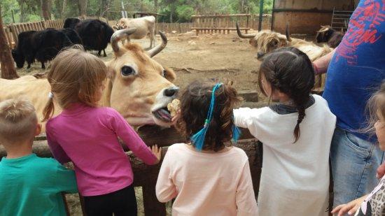 Cessenon-sur-Orb, Frankrijk: Marguerite a fait sensation