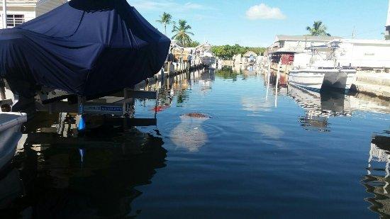 Capt. Sterling's Everglades Tour