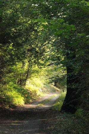 Malvezie, France: Promenade à proximité en forêt