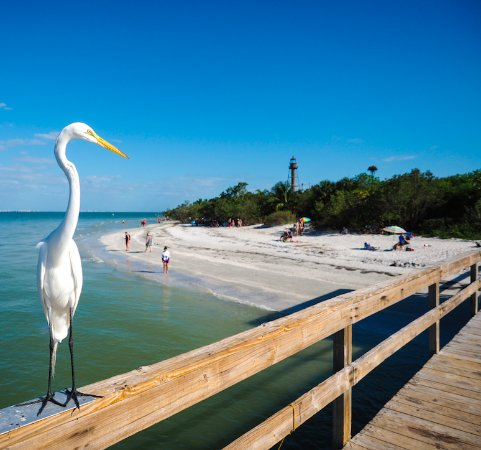 A Day at the Beach - Sanibel Island