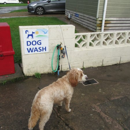 Powfoot, UK: Handy for dirty paws!